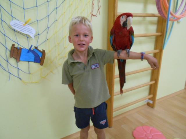 Papouškové u nás ve školce