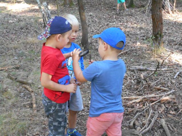 Hry v lese Ferdové